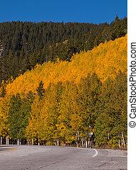 aller bicyclette, tremble, arbres, automne