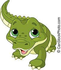 alligator bébé