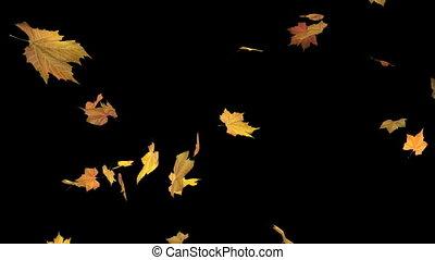 alpha, tomber, -, feuilles