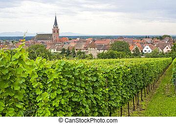 (alsace), panorama, -, bergheim, vignoble
