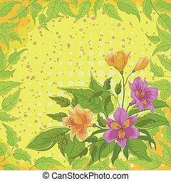 alstroemeria, fleurs, pousse feuilles
