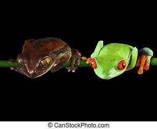 amis, grenouille