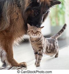 amitié, ensemble, chat, chien, entre, pets., indoors.
