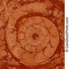 ammonite, marbre