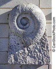 ammonite, pierre, fossile, incorporé