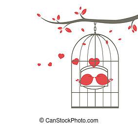 amour, cage, oiseaux