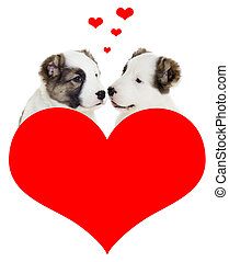 amour chiot, deux
