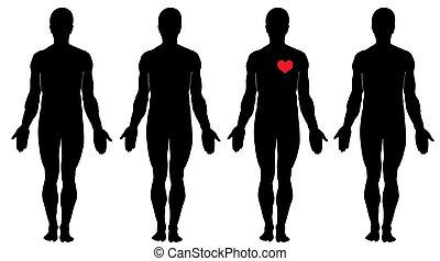 anatomie, amour