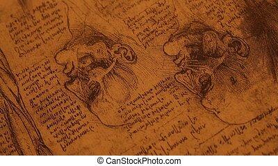 anatomie, art