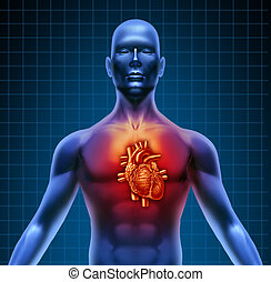 anatomie, coeur, torse, rouges, humain
