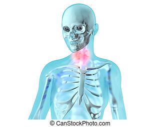 anatomie, gorge, -, femme, douleur