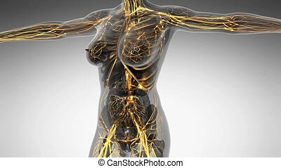 anatomie, humain, science, corps