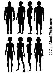 anatomie, vue, corps humain, dos, côté, devant