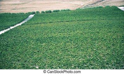 andalousie, vignoble, prise vue aérienne, espagne
