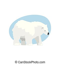 animal, arctique, ours, vecteur, illustration, fond, blanc