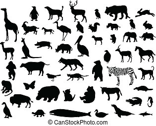 animal, collection