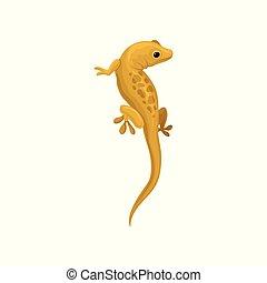animal, illustration, lézard, vecteur, amphibie, fond, blanc