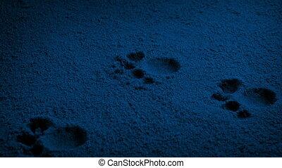 animal, nuit, pied imprime, dépassement