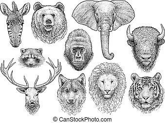 animal, vecteur, collection, gravure, dessin, revêtir art, illustration, encre, tête