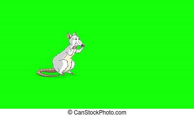 animation, lave, rat, chroma, assied, blanc, clã©
