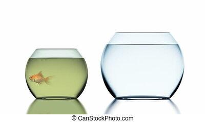 animation, propre, poisson rouge, sauts, beau, 3d, fishbowl., 4k