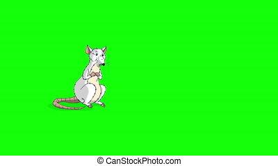 animation, rat, vient, chroma, renifle, blanc, feuilles, clã©
