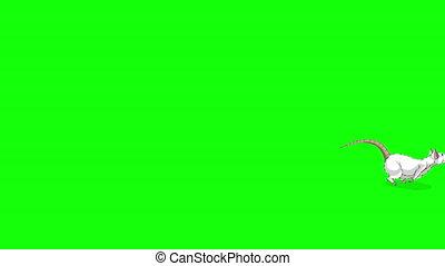animation, sauts, forth, dos, rat, chroma, blanc, clã©