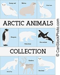 animaux, arctique, collection