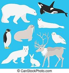 animaux, arctique, collection, trois