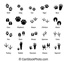animaux, ensemble, pistes, vecteur, pieds, pistes, oiseaux