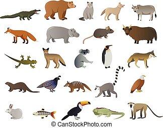 animaux, image, vecteur, sauvage