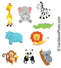 animaux, safari