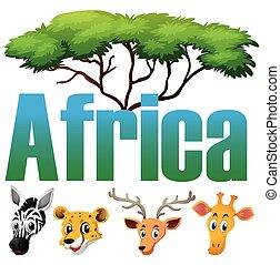 animaux sauvages, afrique