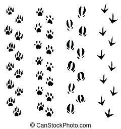 animaux, (vector), pistes, isolé, étapes, fond, blanc