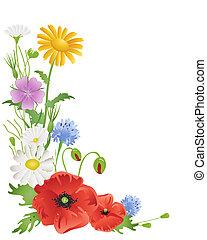 annuel, wildflowers