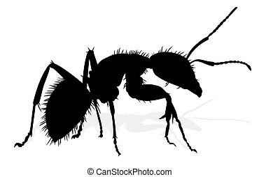 ant., silhouette