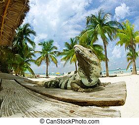antilles, mexique, plage., iguane