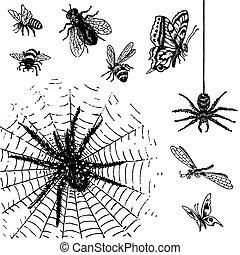 antiquité, insectes, ensemble, (vector)