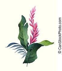 aquarelle, bouquet, feuilles, isolé, exotique, arrière-plan., vecteur, fleurs blanches
