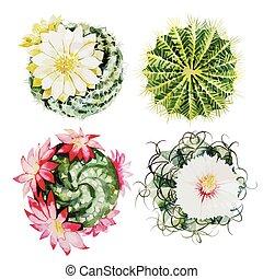 aquarelle, cactus, ensemble