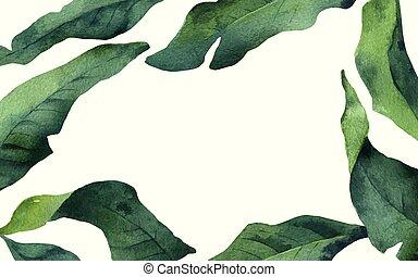 aquarelle, feuilles, isolé, exotique, arrière-plan., vecteur, blanc, bannière