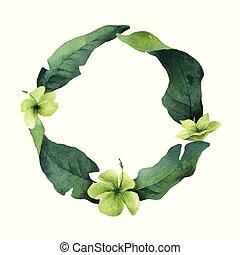 aquarelle, feuilles, isolé, exotique, arrière-plan., vecteur, blanc vert, fleurs, carte