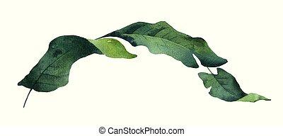 aquarelle, feuilles, isolé, exotique, arrière-plan., vecteur, vert, branche, blanc