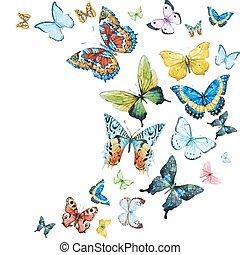 aquarelle, papillons