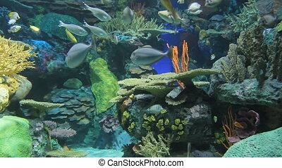 aquarium, exotique, fish