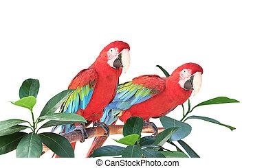 ara, deux, perroquets, feuilles, assied, branche, exotique