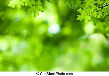 arbre, érable, fond