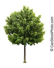 arbre, érable