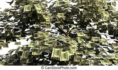 arbre, argent, automne, financier