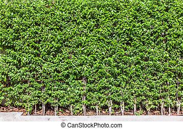 arbre, barrière, fond, mur, vert